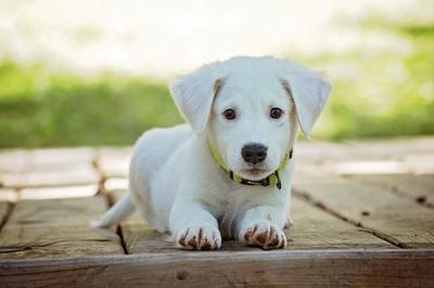 Hundegebühr